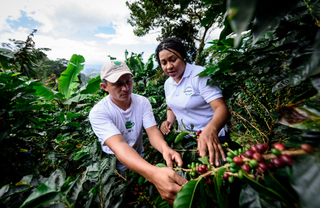 How can roasters market sustainable coffee?